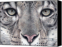 Colored Pencil Canvas Prints - Watching You...Snow Leopard Canvas Print by Pat Erickson