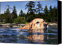 Father Christmas Canvas Prints - Water Dog Canvas Print by Derek Holzapfel