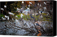 Raining Canvas Prints - Water Fowl Condo Canvas Print by DigiArt Diaries by Vicky Browning