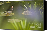 Lotus Pond Canvas Prints - Water Garden Canvas Print by Heiko Koehrer-Wagner
