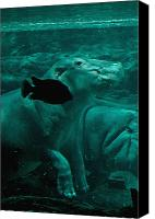 Hippopotamus Canvas Prints - Water Horse Ballet Canvas Print by DigiArt Diaries by Vicky Browning