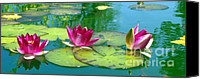 Lotus Pond Canvas Prints - Water Lilies Canvas Print by Ben and Raisa Gertsberg