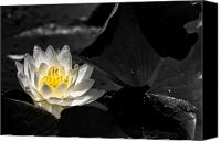 Lilly Pad Canvas Prints - Water Lilly Canvas Print by Michel Soucy