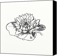 Backdrop Drawings Canvas Prints - Water Lily Canvas Print by Alexei Toiskin