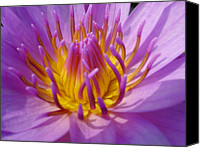 Water Lily Canvas Prints - Water Lily In Close Eye Canvas Print by Zens photo
