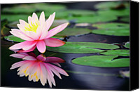 Water Lily Canvas Prints - Water Lily In Lake Canvas Print by Anakin Tseng