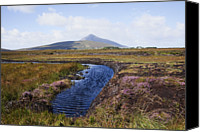 Achill Island Canvas Prints - Water Source In Irish Bog Canvas Print by Design Pics / Peter Zoeller