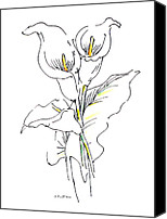 Calla Lily Drawings Canvas Prints - Watercolor Flower Paintings Lily-1 Canvas Print by Gordon Punt