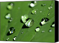 Vegetation Canvas Prints - Waterdrops Canvas Print by Melanie Viola