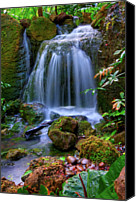 Rainforest Canvas Prints - Waterfall Canvas Print by Patti Sullivan Schmidt