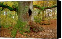 Big Tree Canvas Prints - We are here since 1000 years 2 Canvas Print by Heiko Koehrer-Wagner