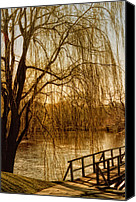 Barbara Middleton Canvas Prints - Weeping Willow and Bridge Canvas Print by Barbara Middleton