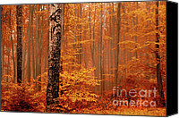 Bulgaria Canvas Prints - Welcome to Orange Forest Canvas Print by Evgeni Dinev