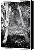 Cay Canvas Prints - Welcome to the Jungle Canvas Print by John Rizzuto