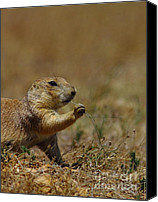 Prairie Dog Photo Canvas Prints - Well I Reckon So Canvas Print by Robert Frederick
