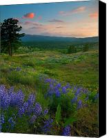 Pine Trees Canvas Prints - Wenas Valley Sunset Canvas Print by Mike  Dawson