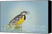 Singing Canvas Prints - Western Meadowlark Canvas Print by Betty LaRue