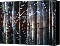 Cedar Canvas Prints - Western Red Cedar Trees Oliphant Lake Canvas Print by Tim Fitzharris