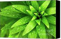Greenish Canvas Prints - Wet Foliage Canvas Print by Carlos Caetano