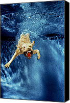 Diving Dog Canvas Prints - Wet Paws Canvas Print by Jill Reger
