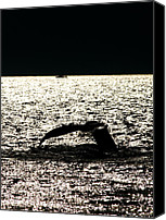 Whale Canvas Prints - Whale in sunset Canvas Print by Mingqi Ge