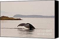 Whale Canvas Prints - Whale Tail Canvas Print by Darcy Michaelchuk