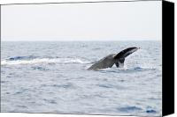 Whale Canvas Prints - Whale Tail Canvas Print by Michael Peychich