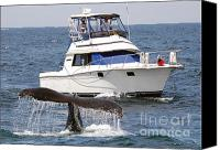 Whale Canvas Prints - Whale Watching Canvas Print by Jim Chamberlain