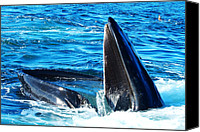 Ocean Digital Art Canvas Prints - Whales opening mouth Canvas Print by Mingqi Ge