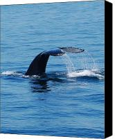 Ocean  Canvas Prints - Whales Tale Canvas Print by Lisa Kane