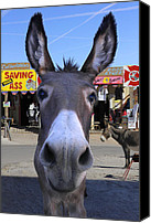 Donkey Canvas Prints - What . . . No Carrots Canvas Print by Mike McGlothlen