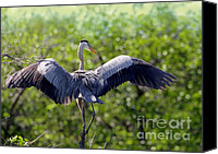 Color Stretching Canvas Prints - What a Wingspan Canvas Print by Sabrina L Ryan