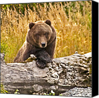 Kodiak Canvas Prints - Whats For Lunch Canvas Print by William Howard