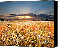 Sunset Canvas Prints - Wheat At Sunset Canvas Print by Meirion Matthias