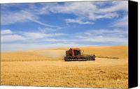 Rural Photo Canvas Prints - Wheat Harvest Canvas Print by Mike  Dawson