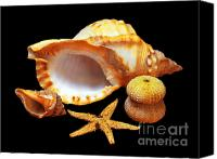 Urchin Canvas Prints - Whelk Canvas Print by Carlos Caetano