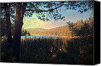 Pine Trees Canvas Prints - When Im In Your Arms Canvas Print by Laurie Search