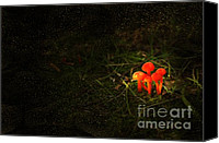 Mushroom Canvas Prints - When Ye Go Away Canvas Print by The Stone Age
