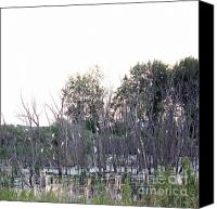 Roost Canvas Prints - Where Egrets Nest Canvas Print by David Bearden
