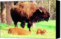 Buffalo Mixed Media Canvas Prints - Where The Buffalo Roam Canvas Print by Desiree Paquette