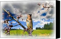 Animal Canvas Prints - Where The Waxwings Used To Dwell Canvas Print by Bob Orsillo