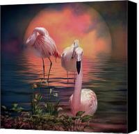 Animal Art Print Mixed Media Canvas Prints - Where The Wild Flamingo Grow Canvas Print by Carol Cavalaris