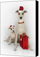 Father Christmas Digital Art Canvas Prints - Whippet Christmas Canvas Print by John Clum