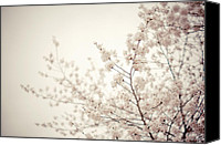 Tree Blossoms Canvas Prints - Whisper - Spring Blossoms - Central Park Canvas Print by Vivienne Gucwa