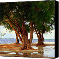 Botanical Beach Canvas Prints - Whispering Trees of Sanibel Canvas Print by Karen Wiles