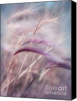 Weed Canvas Prints - Whispers In The Wind Canvas Print by Priska Wettstein