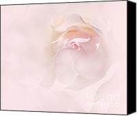 Pale Rose Canvas Prints - Whispers of a Pink Rose Canvas Print by Jennie Marie Schell