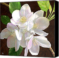 Spring Canvas Prints - White Apple Blossom Canvas Print by Theresa Evans