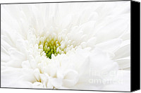 Macro Photography Canvas Prints - White beauty Canvas Print by Kristin Kreet