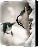 Nature  Canvas Prints - White Breasted Nuthatch In The Snow Canvas Print by Bob Orsillo